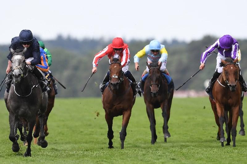 Coronation stakes betting websites dafina zeqiri over under betting
