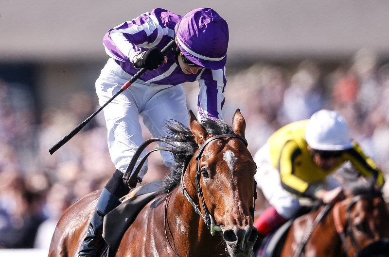 St james palace stakes bettingadvice what are units in sports betting