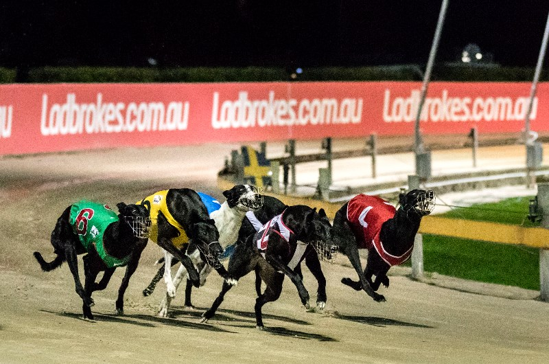 image for greyhound live streaming with BetEasy, October 9