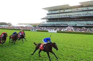 caulfield stakes bettingadvice