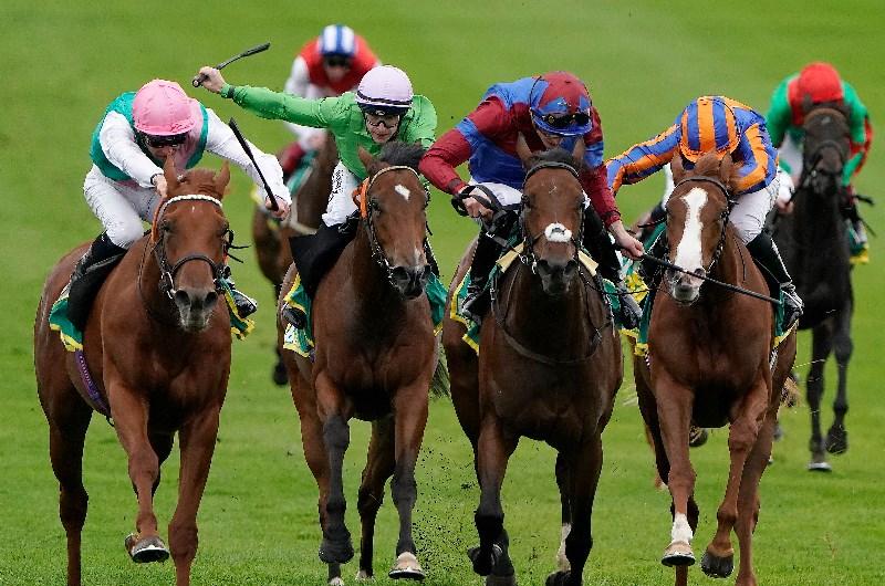 Oddschecker 1000 guineas betting live online sports betting