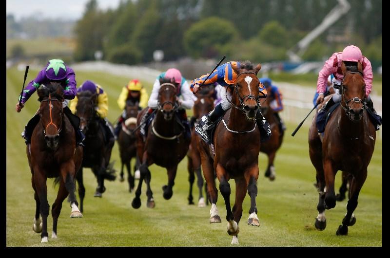 Irish 1000 guineas betting websites sports betting terms push lawn