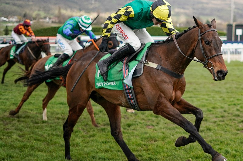 Stayers hurdle betting sites binary options brokers regulated investment