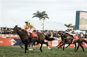 durban july runners and betting trends