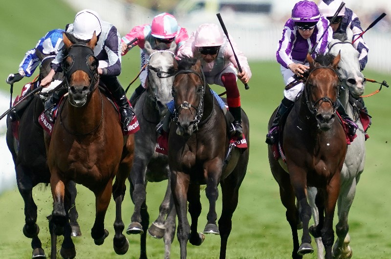 goodwood sussex stakes betting odds