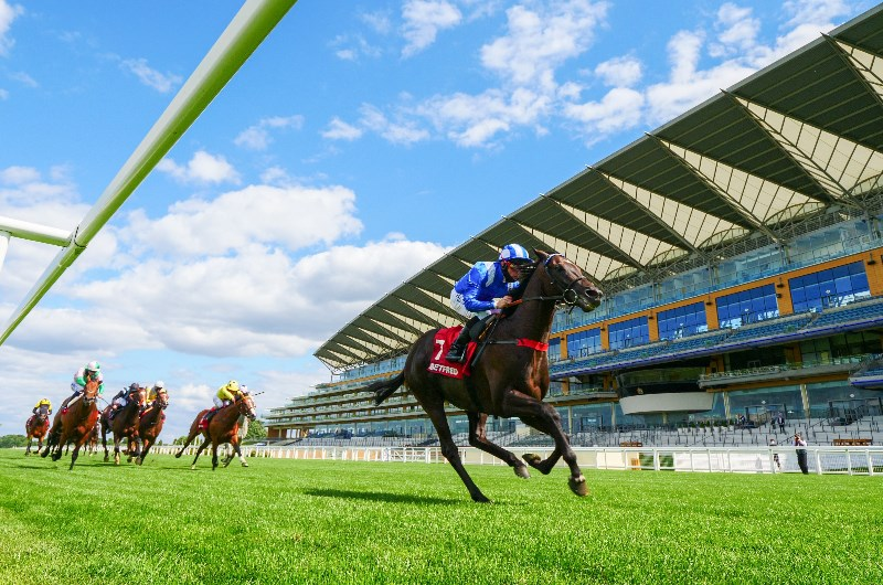 Sussex stakes 2021 betting tips wirtshaus im spessart bettingen