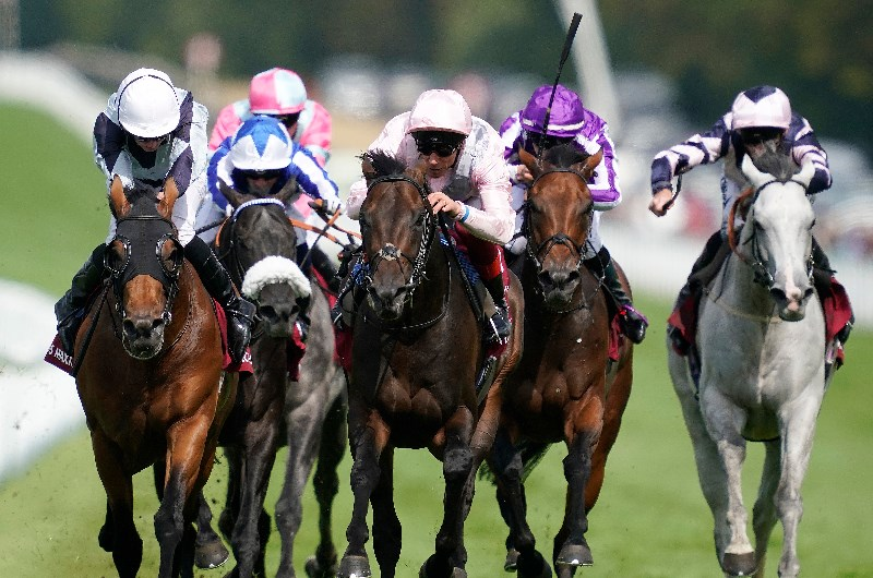 Goodwood sussex stakes betting websites betting on the breeders cup online