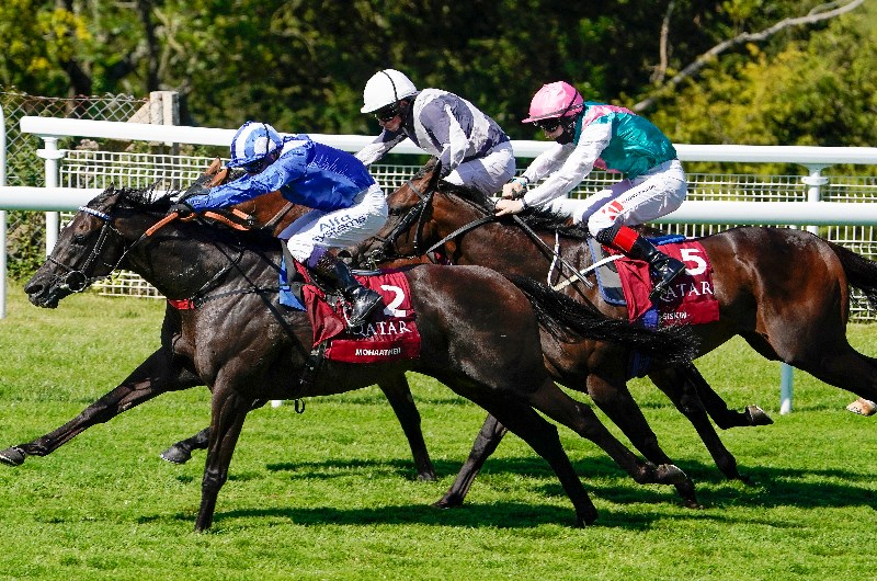 Sussex stakes betting websites week 3 nfl lines from sports betting stats