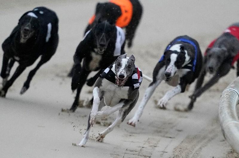 Doncaster dog racing betting wayne bettinger obituary