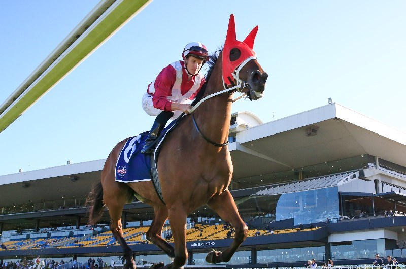 Arcadia Queen set for her Everest challenge