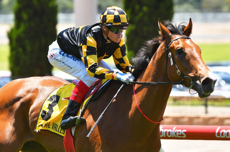 Memsie stakes betting line sport betting online sites