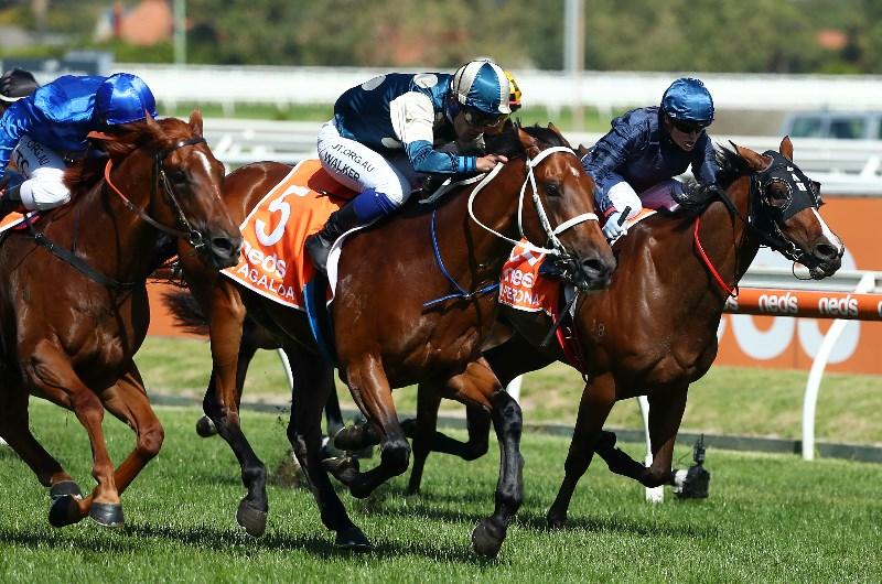 Caulfield races sports betting poker sports betting profit system