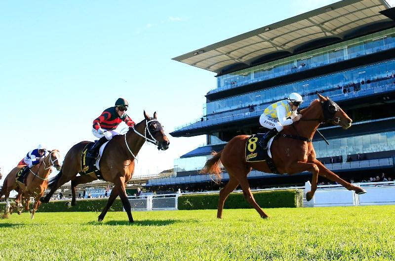 Randwick races sports betting winning margin betting rules holdem