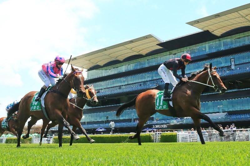 Randwick races sports betting online kings sports betting uganda online betting