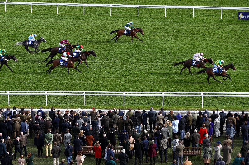 coral cup cheltenham